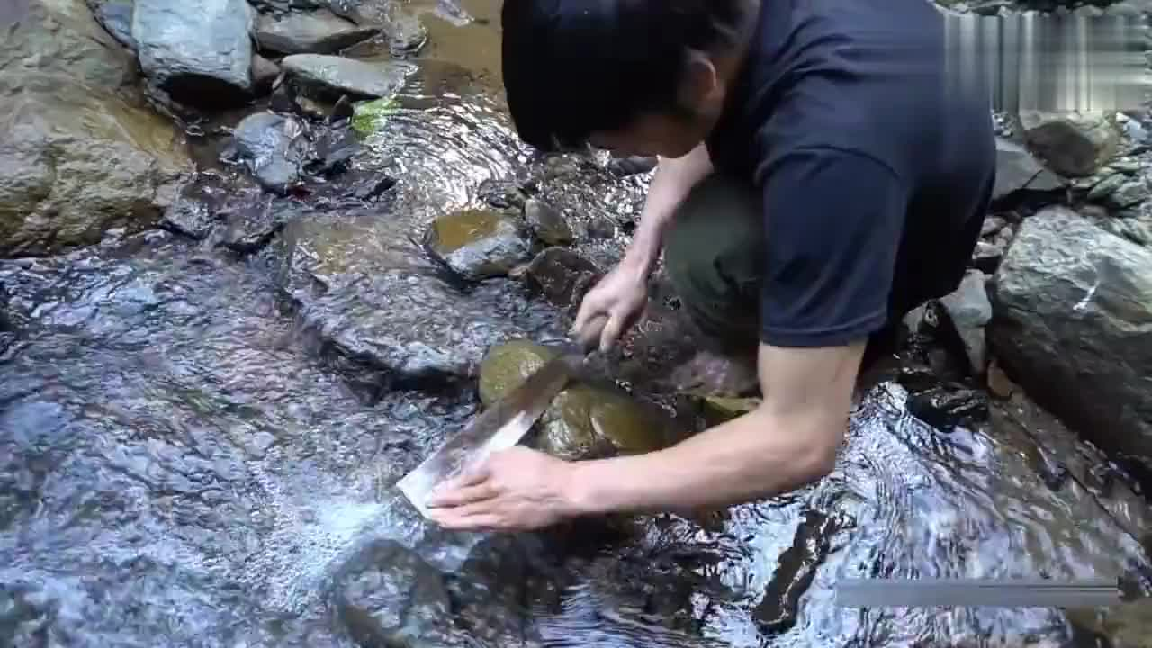 野外求生技能河里很常见的藻类植物放在火上烧熟就能吃