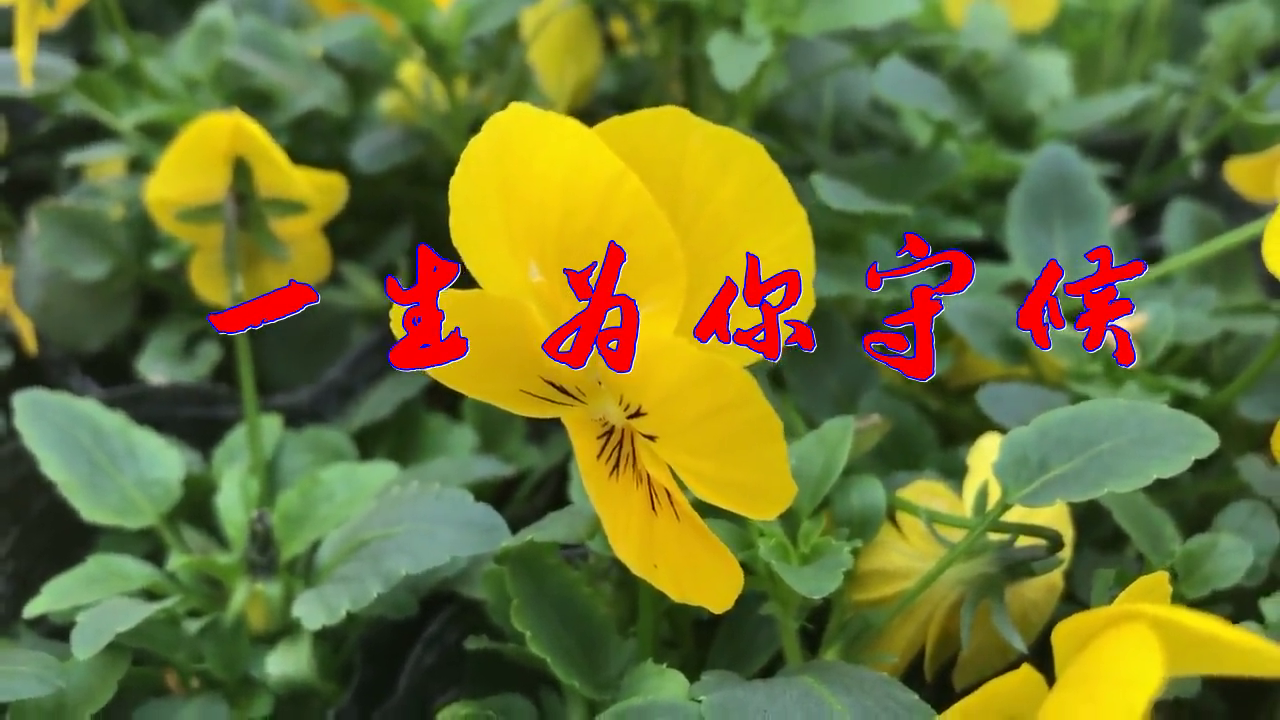 惠子&望海高歌的《一生为你守候》,此曲风风韵韵,喉清韵雅