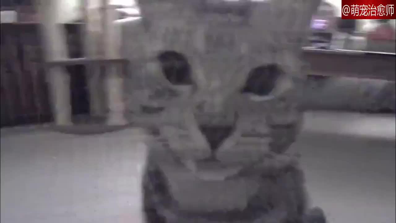 家里买了宠物摄像头看着猫猫却一直都盯着摄像头看谁瞪过谁