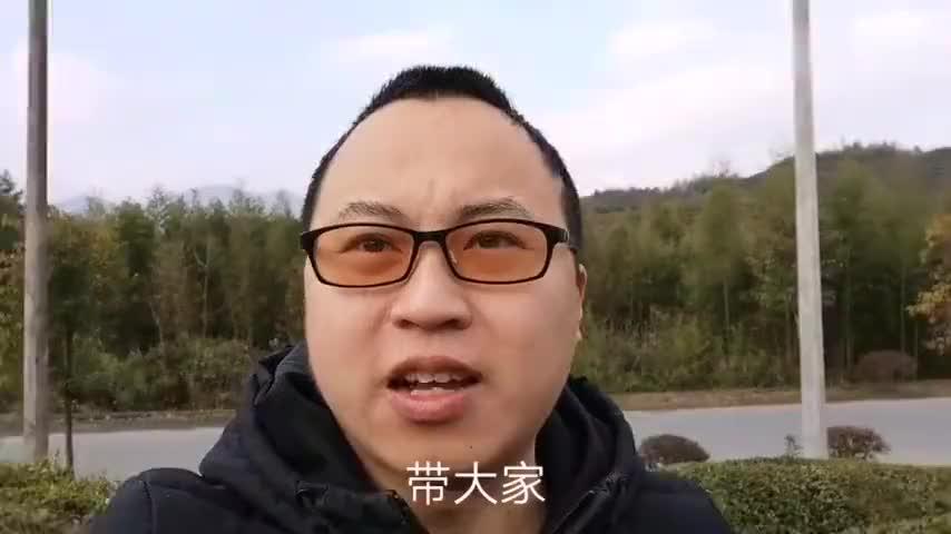 来到杭州天目山茶园清新绿色是它的腔调靠近它就是靠近大自然