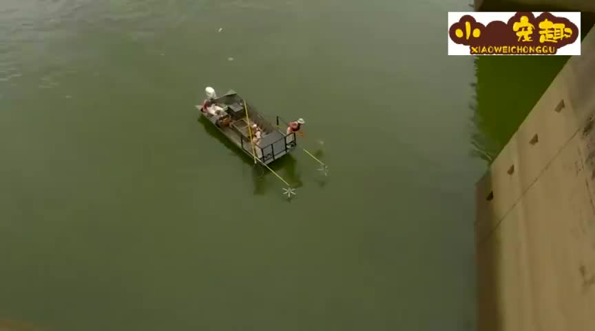亚洲鲤鱼一发不可收拾美国人开始电鱼水面瞬间沸腾