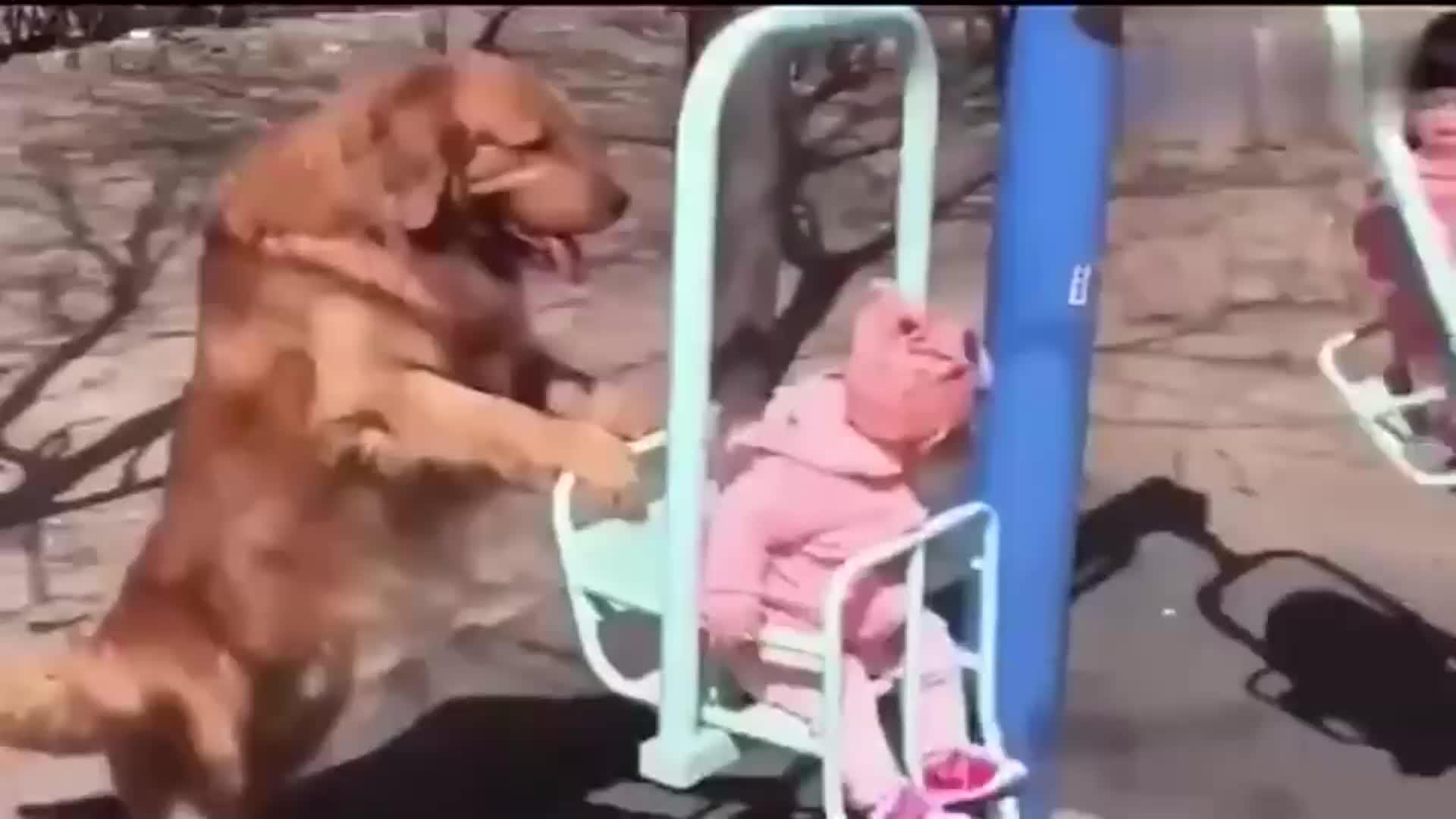 金毛陪小主人玩耍直接变身狗保姆接下来的画面太温馨啦