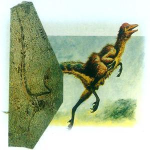 鸟类的祖先是什么鸟