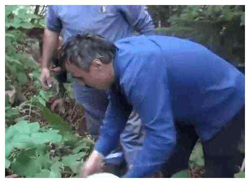 男子捡蘑菇,发现灌木丛下闪闪发光,好奇凑近后,兴奋叫出声