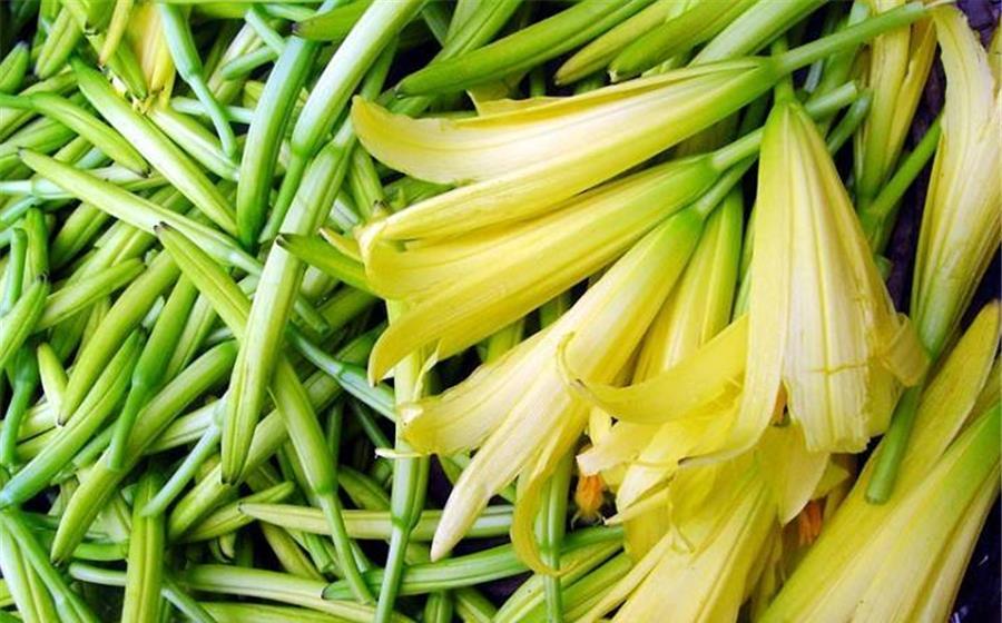 黄花菜种植技术要领,学会这几招,种植户收益很高