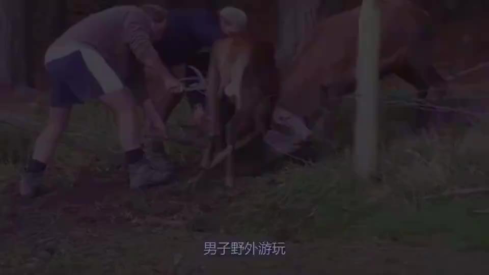 动物奇闻大爷发现泥潭有异样走近一看连忙喊来全村人帮忙