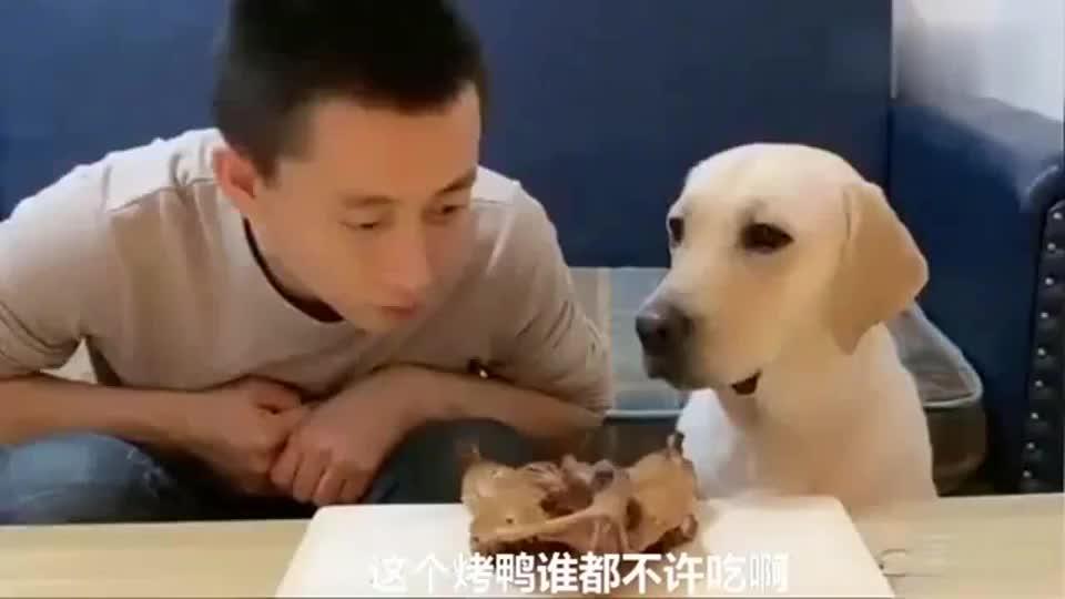赛文替妈妈看管烤鸭爸爸想吃赛文不让最后谁也没能禁住诱惑