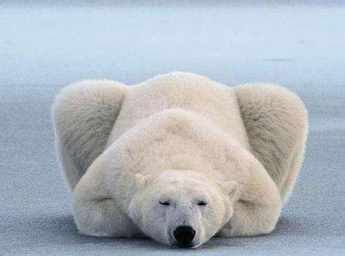 熊冬眠吗?哪些熊冬眠呢?