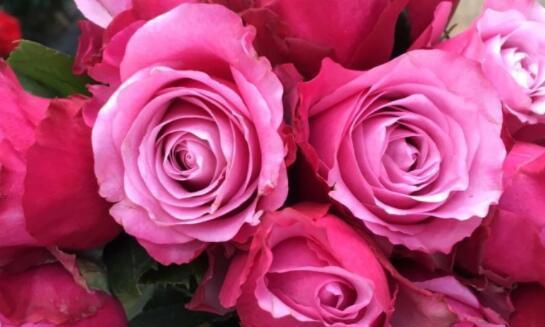 """1种""""了不起""""的花,花朵超大,开花姿态妖娆,超有魅力还很美"""