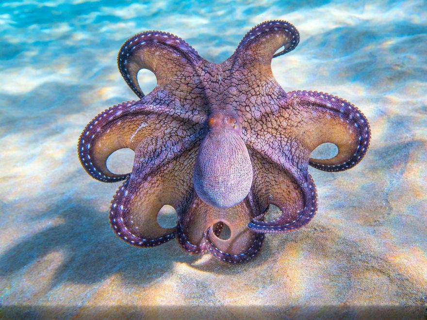 章鱼电影射出,墨水腿复活开始盒子.一只鳗鱼从小人身边飞向我的章鱼.深色里镜头伸出的洞口图片