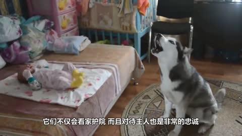 时凤兰:唐丹你单炮单仕都赢不了我单帅?