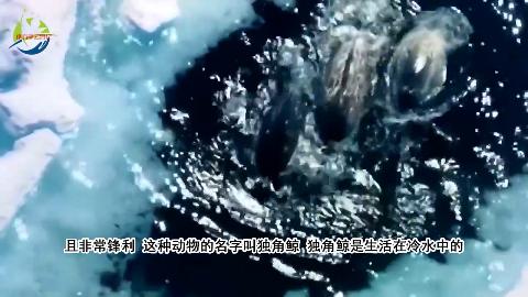 冰冷海域神秘生物长相酷似独角兽网友一只角值一套房子