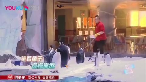 极限挑战:史上最惨的嘉宾,岳云鹏挑战喂企鹅,差点掉冰水里!