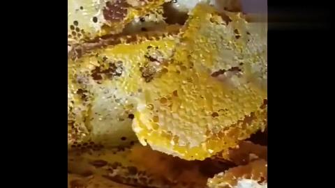 奶奶刚从山里找来的野生蜂巢蜜,真是大自然的馈赠
