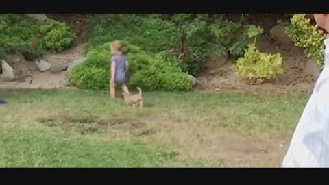被小狗狗追的小宝宝,接下来的场景让宝宝绝望了