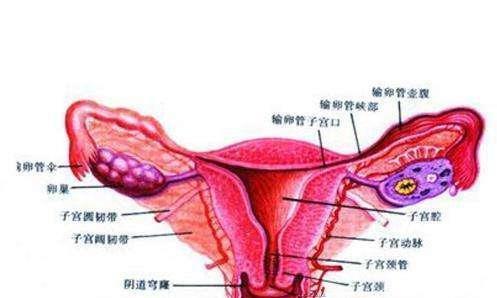 输卵管炎该怎么治疗?