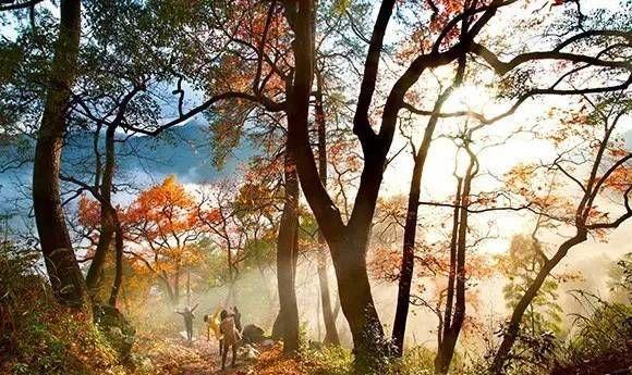 与香山齐名的八大赏枫地南黄古道。国内保存最好的枫叶古道之一