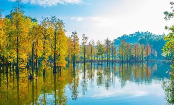 人均¥1XX,享10万亩原生林海+畅游超大户外泳池+露天珍稀温泉