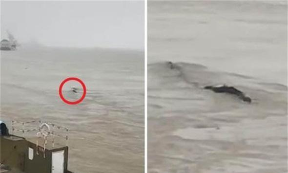 """中国版""""尼斯湖水怪""""被抓住!一根20米长的油管引发乌龙事件"""