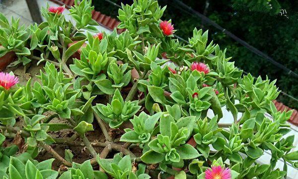 四款特色的花卉,花型独特优美,花开繁盛又迷人,秋天枝上花苞满