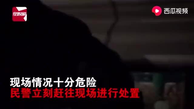 实拍!吉林四平一疯牛乱冲伤人,警方30分钟内一枪击毙!
