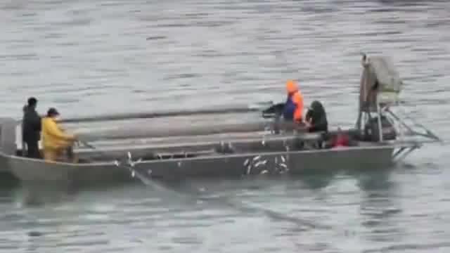 钓鱼捕捉技能海上刺网捕鱼一下就收获满满