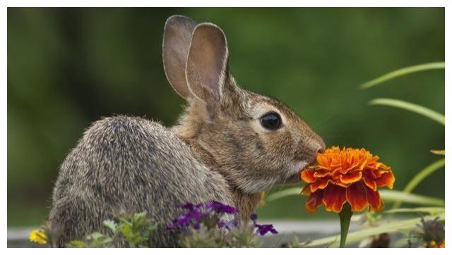 """兔人, 明天开始""""人生大反转"""", 贫民变土豪, 不接不吉利!"""