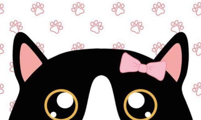 救助的一只斗鸡眼黑猫,大家都以为它傻,但是黑猫却十分通人性