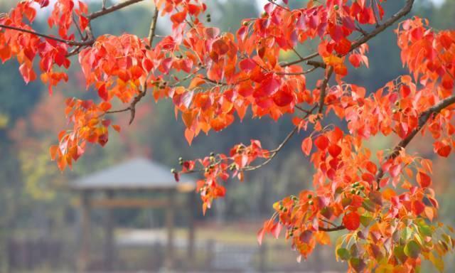 """《宿迁""""三台山""""的秋天衲田花海的风景格外迷人》"""