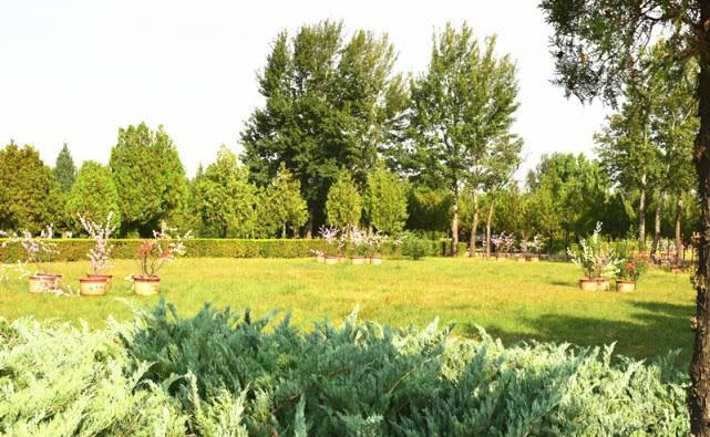 四川眉山建成49个公益性墓地 对生态葬家属提供千元奖补