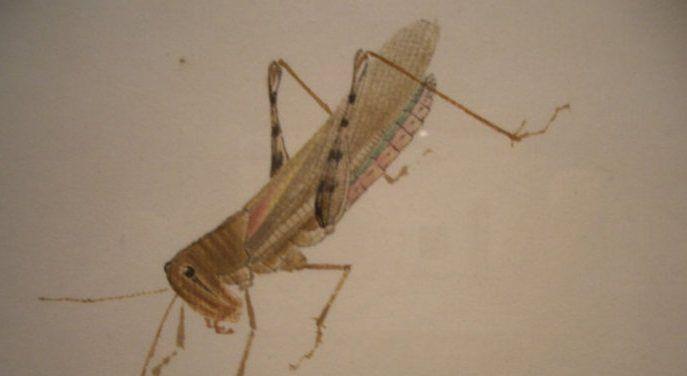 齐白石画的昆虫,惟妙惟肖,有的需要放大镜下欣赏!