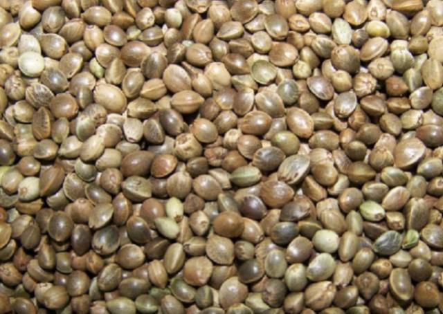 """它是甘肃人的休闲食品,名叫麻籽,曾是""""五谷""""之一,你吃过没"""