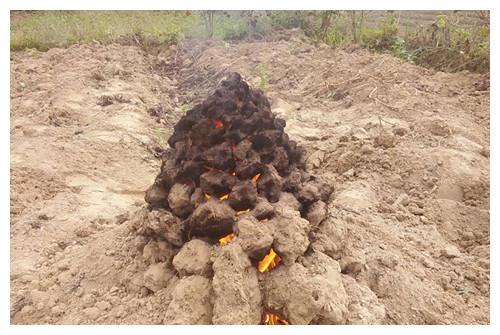 """它含有多种矿物质,被称为""""长寿食品"""",小时候经常去田野烤着吃"""