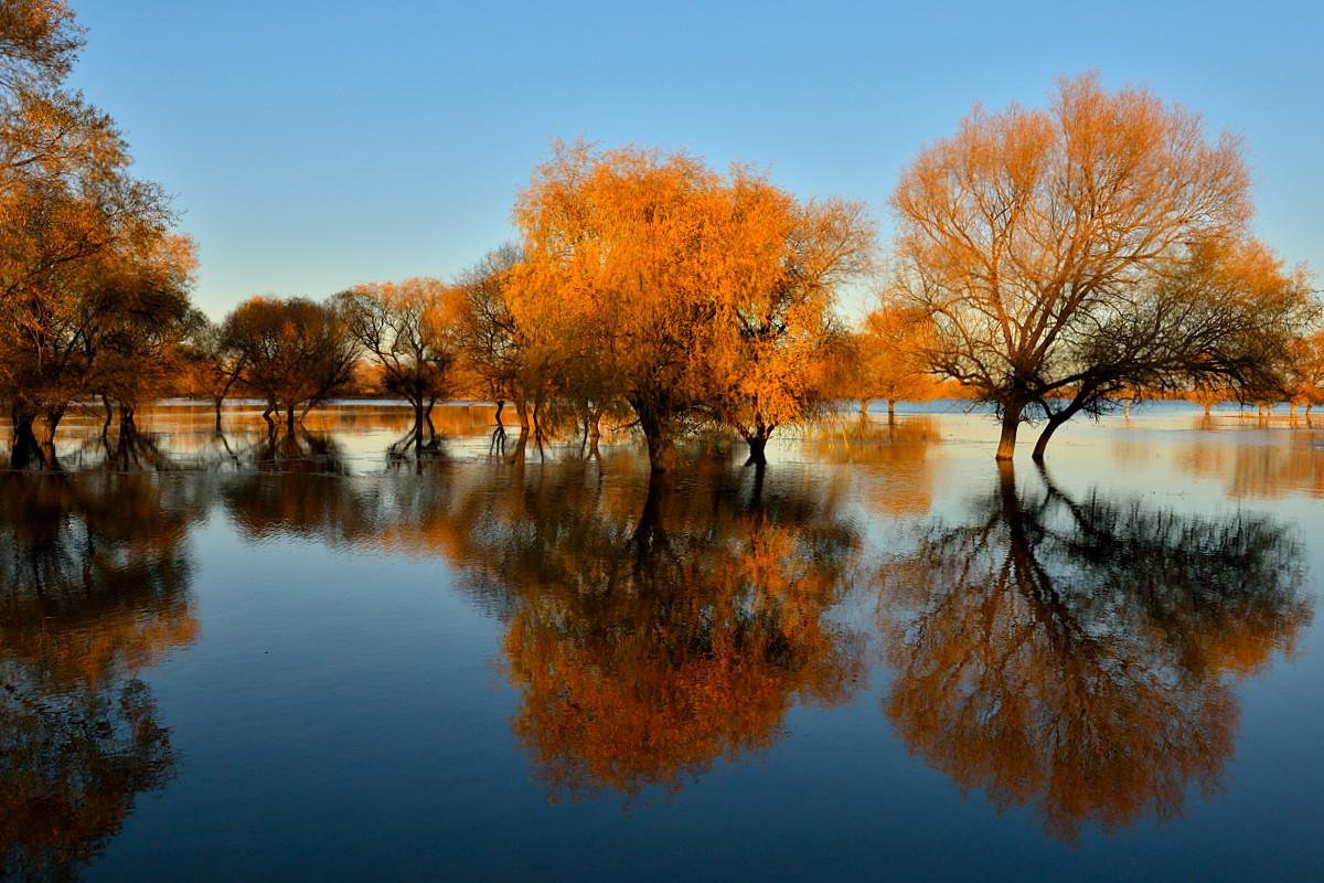 金秋吉林向海湿地黄榆林倒影连连,交错在湖泊和草甸之间