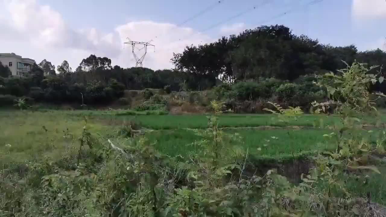 飞驰在广东乡村的田野上