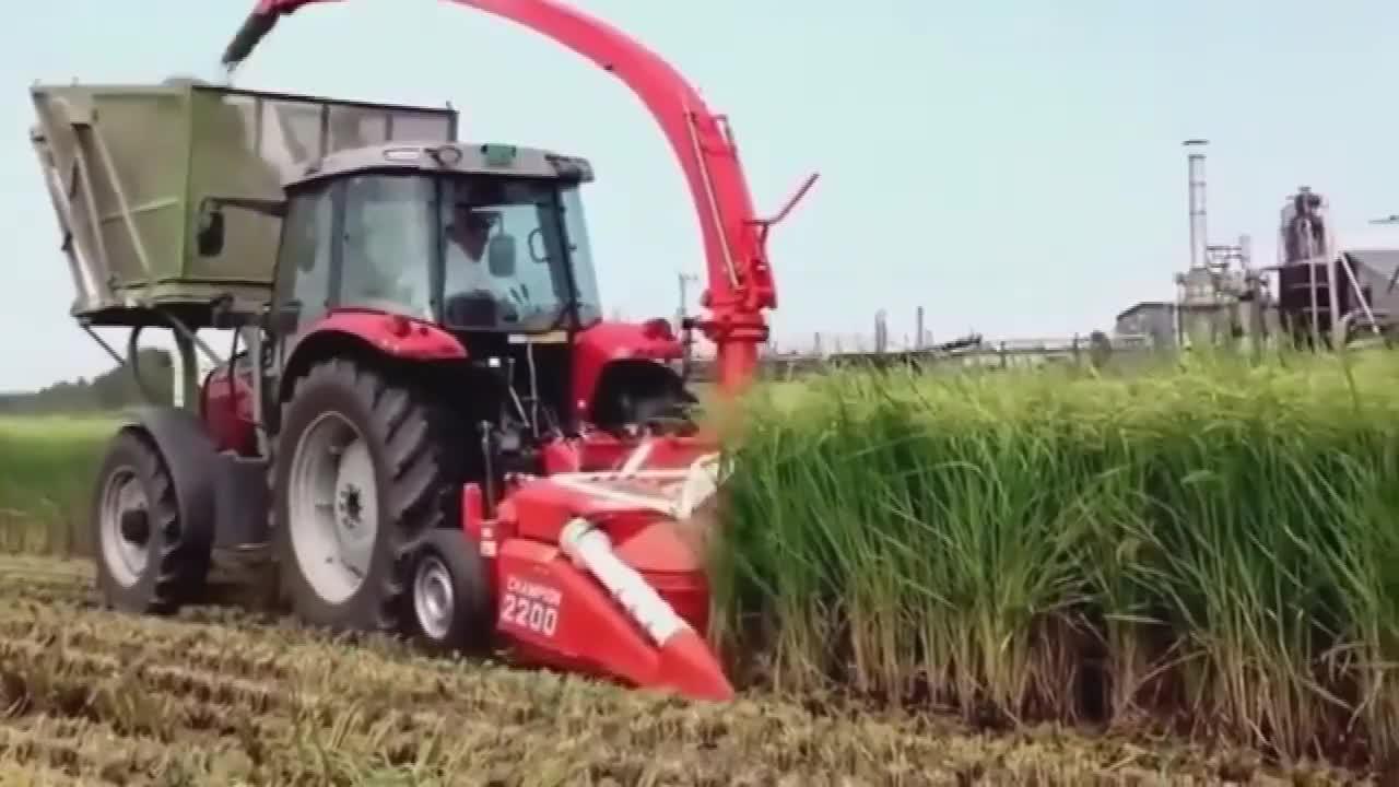 禾苗稻穗收割后直接打成粉这收割机真厉害