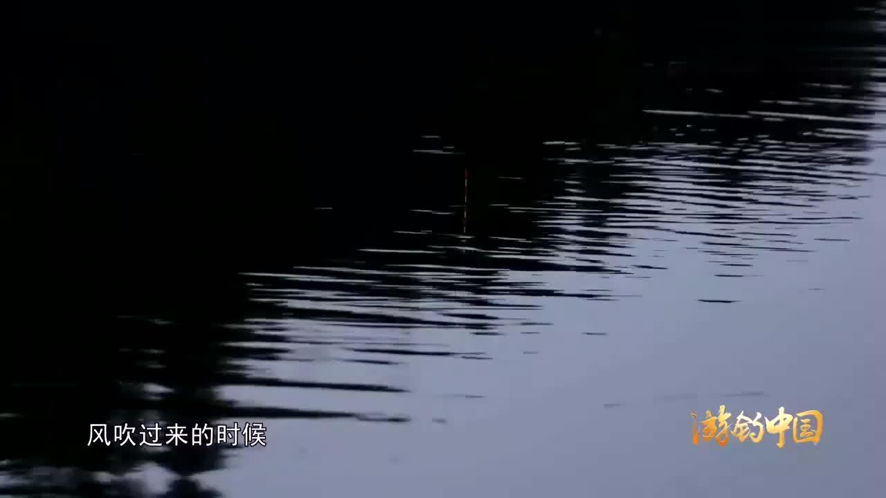 李大毛户外野钓遇到了鲢鳙群大鲢鱼上不停