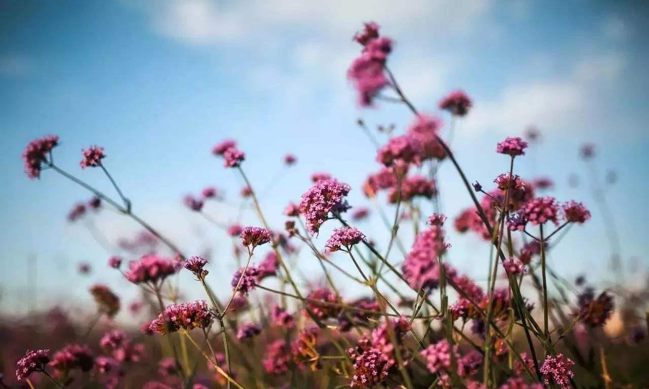 小白也能养的很好的小花花,这也养不好?那可能你不适合养花