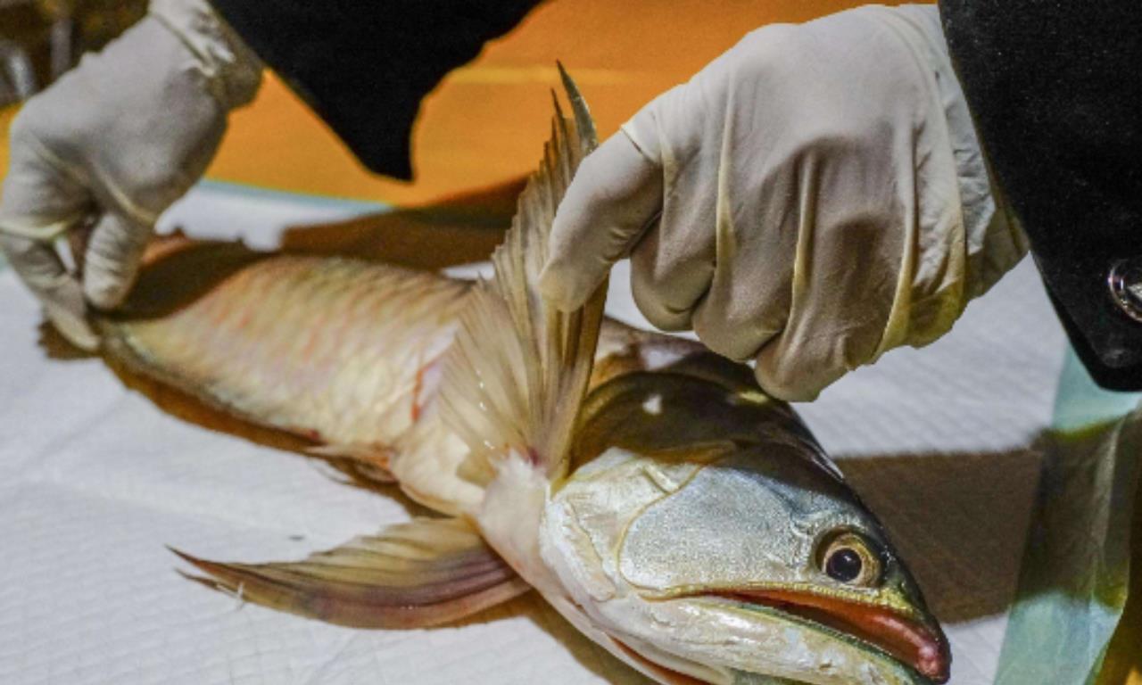 国外男子把鱼放进水里,没过多久鱼就死了,背后的原因竟难以相信