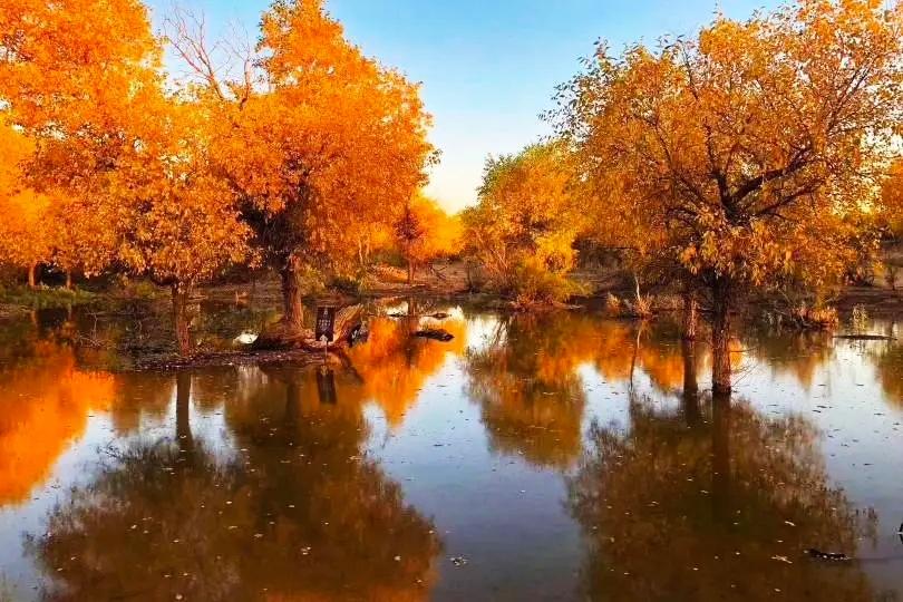 内蒙额济纳七道桥胡杨林:又称梦境林,多数在水中,又称倒影林。