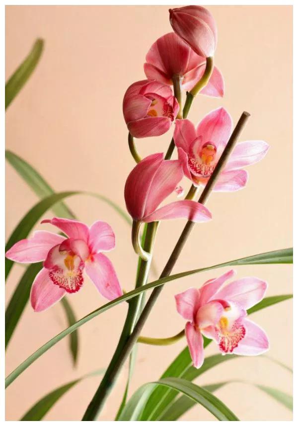 中国人最喜欢的五种花,你知道吗?