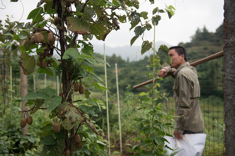 这男人辞去月薪上万的工作回家种田,只为过上自己想要的生活