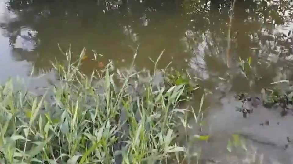 去钓鱼用传统捕鱼方法水草在多也不怕一条接一条