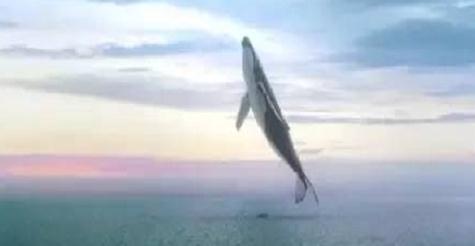 反坦克枪打鲸鱼,反步兵地雷炸棕熊,俄罗斯的人民真会玩
