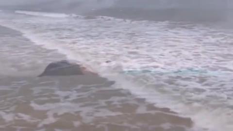 海边发现无名女尸,女警官给他拍照竟然吐了,还发现一个奇怪印章!