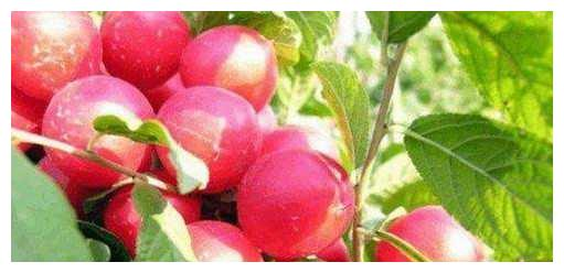 """农村山上""""纯野生""""的果子,营养价值特别高,曾经可是皇帝贡果!"""