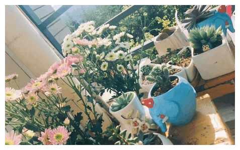 重庆一高校学霸妹纸寝室如花园, 学习生活两不误