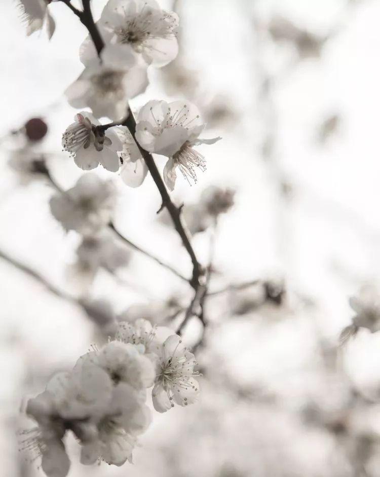 春季赏花新去处丨合肥匡河边现唯美画卷,天鹅湖上游好一番绚丽!
