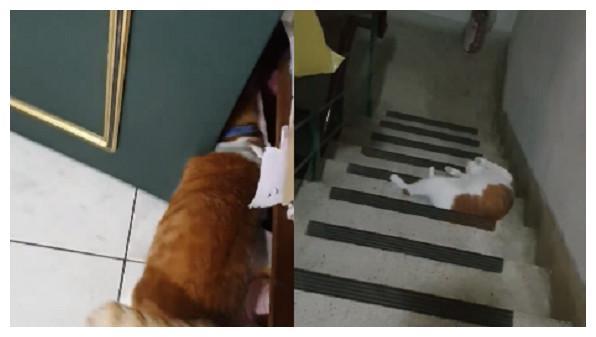 妈开门喊滚出去 胖橘液态滚2楼