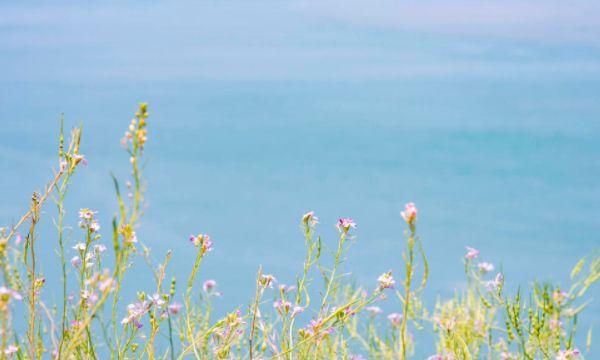 白天小希腊,夜晚荧光海?来花鸟岛逛一逛吧!